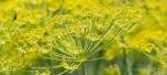 Floral Abundance – a unique garden system