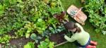 Organic Pest Treatments