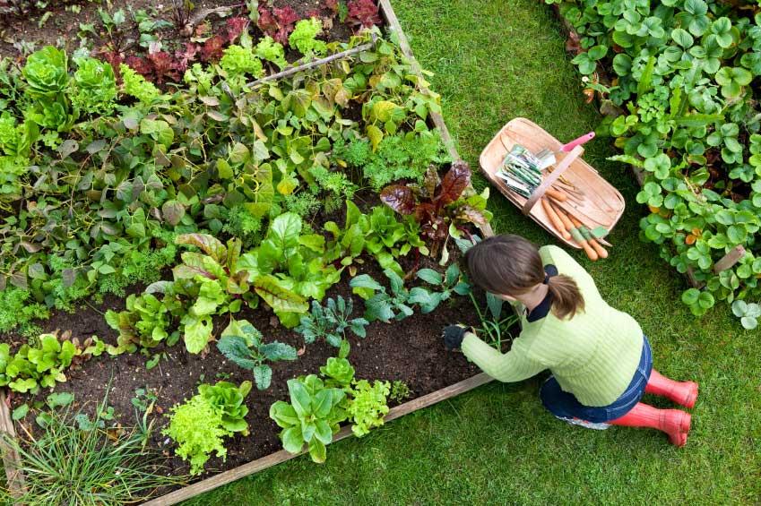 Royal Tasmanian Botanical Gardens Pest Management