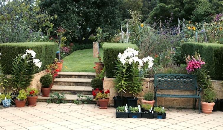 From blank canvas to stunning cottage garden in hobart in for Garden design hobart