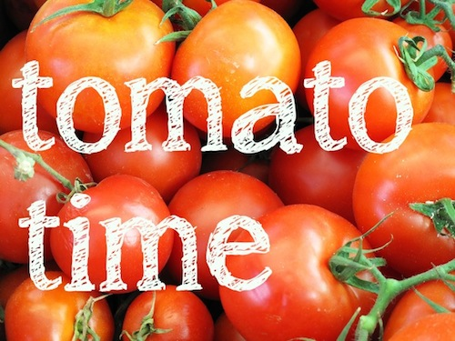 Here are some tips from our Tasmanian horticulture courses that will give you a healthy, disease free tomato crop this year.