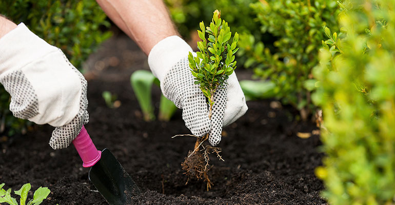 Person planting tree in a nursery GlobalNet Academy Horticulture Courses